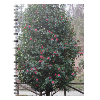 Ancient japanese cultivar of Camellia japonica Notebook