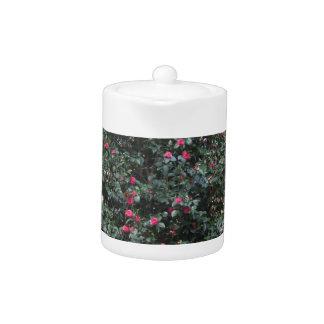 Ancient japanese cultivar of Camellia japonica Teapot