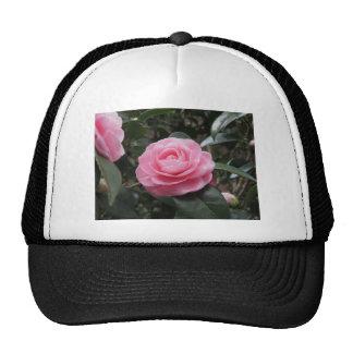 Ancient japanese cultivar of Camellia japonica Trucker Hat