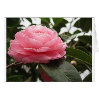 Ancient japanese cultivar of pink Camellia Card