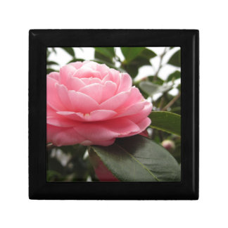Ancient japanese cultivar of pink Camellia Jewelry Box