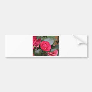 Ancient japanese cultivar of red Camellia japonica Bumper Sticker