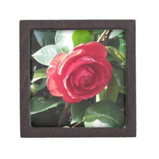 Ancient japanese cultivar of red Camellia japonica Gift Box