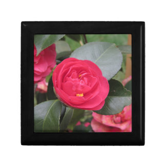 Ancient japanese cultivar of red Camellia japonica Keepsake Box