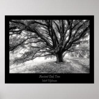 Ancient Majestic Oak Tree poster in Black & White