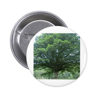 Ancient Oak Tree at Sycharth Castle, Powys Pinback Buttons