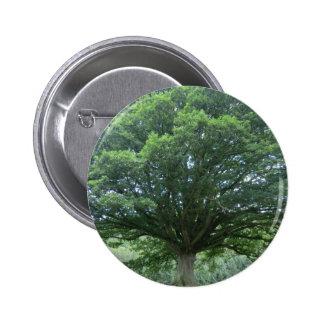 Ancient Oak Tree at Sycharth Castle, Powys Pin