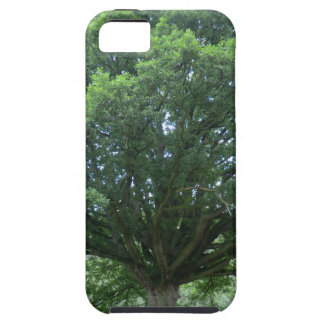 Ancient Oak Tree at Sycharth Castle, Powys iPhone 5 Covers