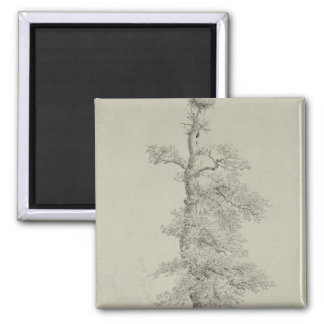 Ancient Oak Tree with a Stork's Nest 2 Inch Square Magnet