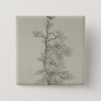 Ancient Oak Tree with a Stork's Nest Pinback Button
