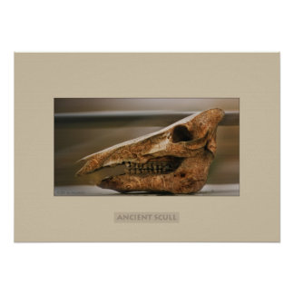 Ancient scull print