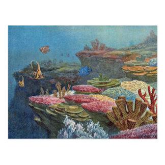 Ancient Sea Coral Antique Print Postcard