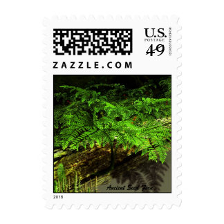 Ancient Seed Fern Stamp