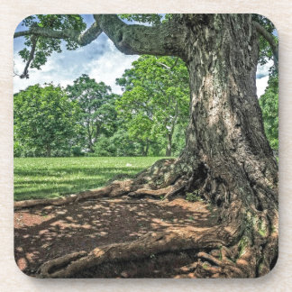 Ancient Tree and Roots Beverage Coasters