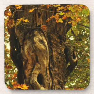 Ancient Tree Coasters