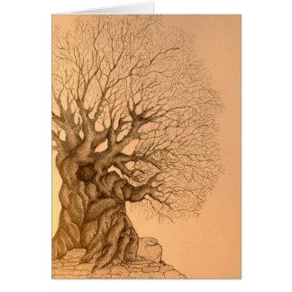 Ancient Tree Drawing Card