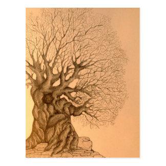 Ancient Tree Drawing Postcard