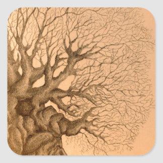 Ancient Tree Drawing Square Sticker