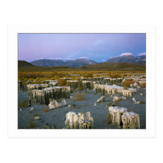 """Ancient Watermark"" Postcard"