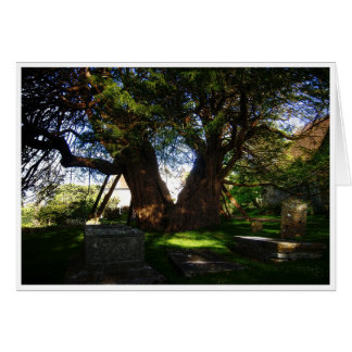 Ancient Yew Greeting Card