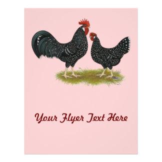 Ancona Chickens Flyer