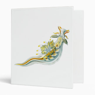 Ancula gibbosa binder