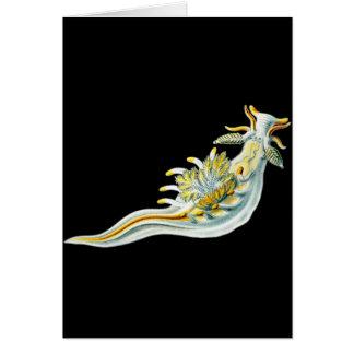 Ancula gibbosa card