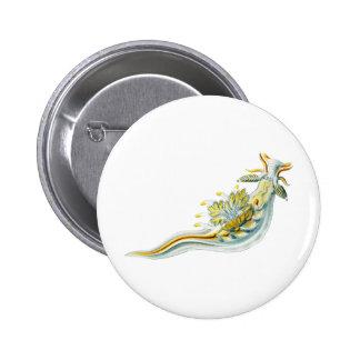 Ancula gibbosa pinback button