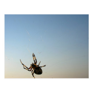 And Down Sat a Spider Postcard