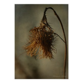 And Sow the Day Ends - Open Seed Pod Photograph print