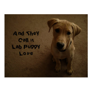 And They Call It Lab Puppy Love Postcard