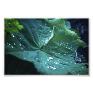 And They were Caught (The Sky's Tears) Art Photo