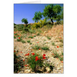 Andalucian landcape with poppies. cards