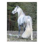 Andalusian 2 postcards