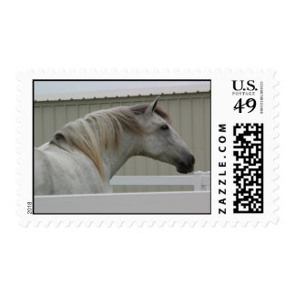 ANDALUSIAN HEAD SHOT STAMP