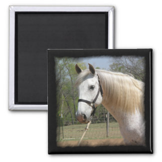 ANDALUSIAN HORSE HEAD MORISCO 2 INCH SQUARE MAGNET