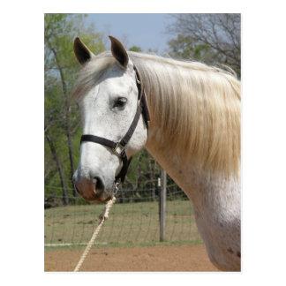 ANDALUSIAN HORSE HEAD MORISCO POSTCARD