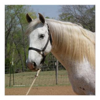 ANDALUSIAN HORSE HEAD MORISCO POSTER