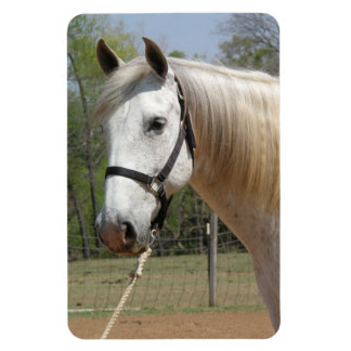 ANDALUSIAN HORSE HEAD MORISCO RECTANGULAR PHOTO MAGNET