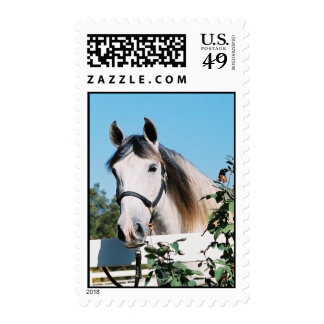 ANDALUSIAN HORSE HEAD Stamp