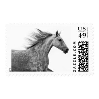 Andalusian Horse Head with Flowing Mane Postage