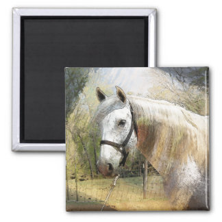 ANDALUSIAN HORSE PORTRAIT REFRIGERATOR MAGNET