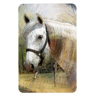 ANDALUSIAN HORSE PORTRAIT VINYL MAGNET