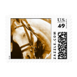 Andalusian Horse Postage Stamp