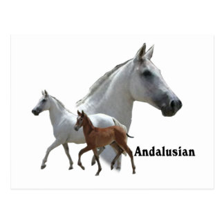 Andalusian Horse Postcard