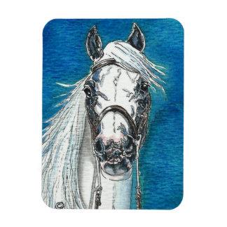 Andalusian Horse Premium Flexi Magnet