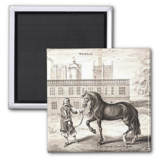 Andalusian Horse Vintage Drawing Art Magnet