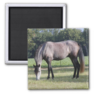 Andalusian Mare Refrigerator Magnets