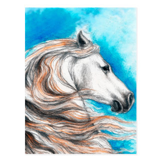 Andalusian Stallion Horse Postcard