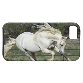 Andalusian Stallion running, PR iPhone 5 Cases